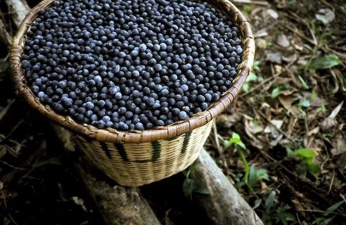 Acai, proprietà e benefici