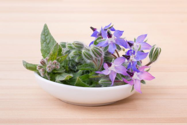 Bourrache dans la cuisine - Cure-Naturali.it